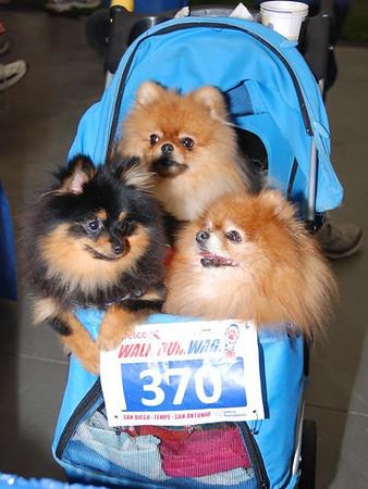 Walk Run Wag San Diego 2012